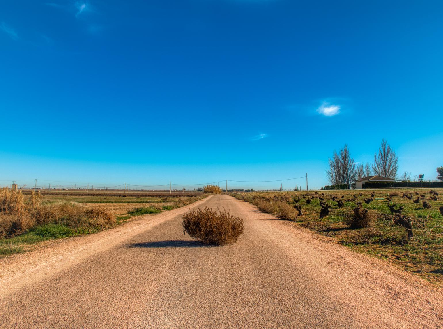 A road with tumbleweed